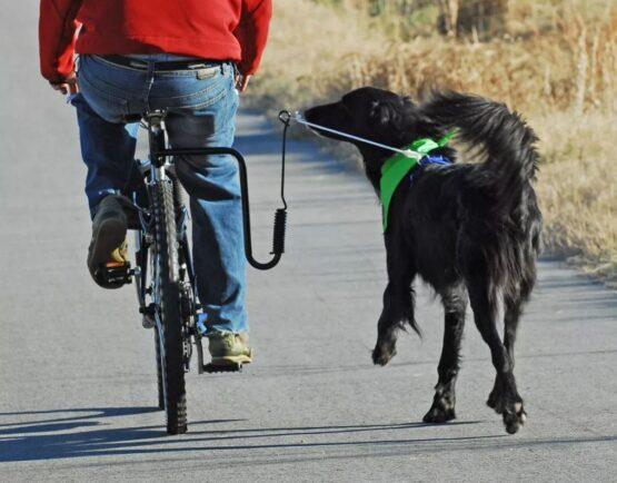 Gancho soporte para pasear perros en la bicicleta manos libres 1