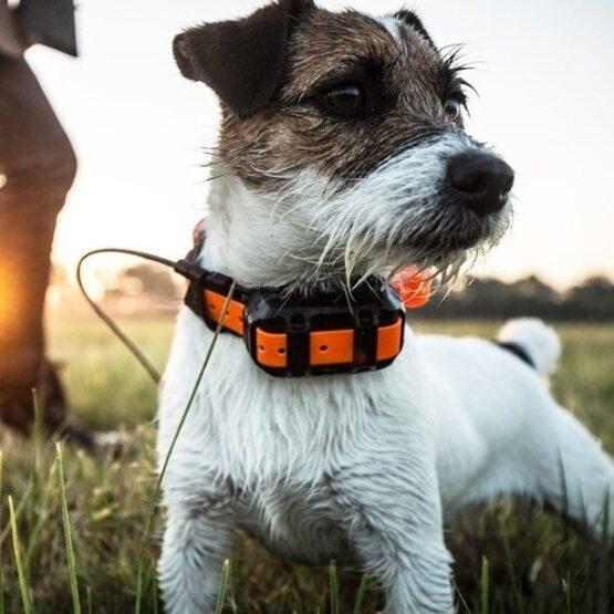 Collar T5 Garmin - El mejor diseño para Adiestramiento de perros 5
