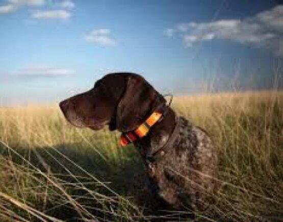 Collar T5 Garmin - El mejor diseño para Adiestramiento de perros 6