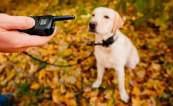 Collar para Adiestrar Perros Electronico 2